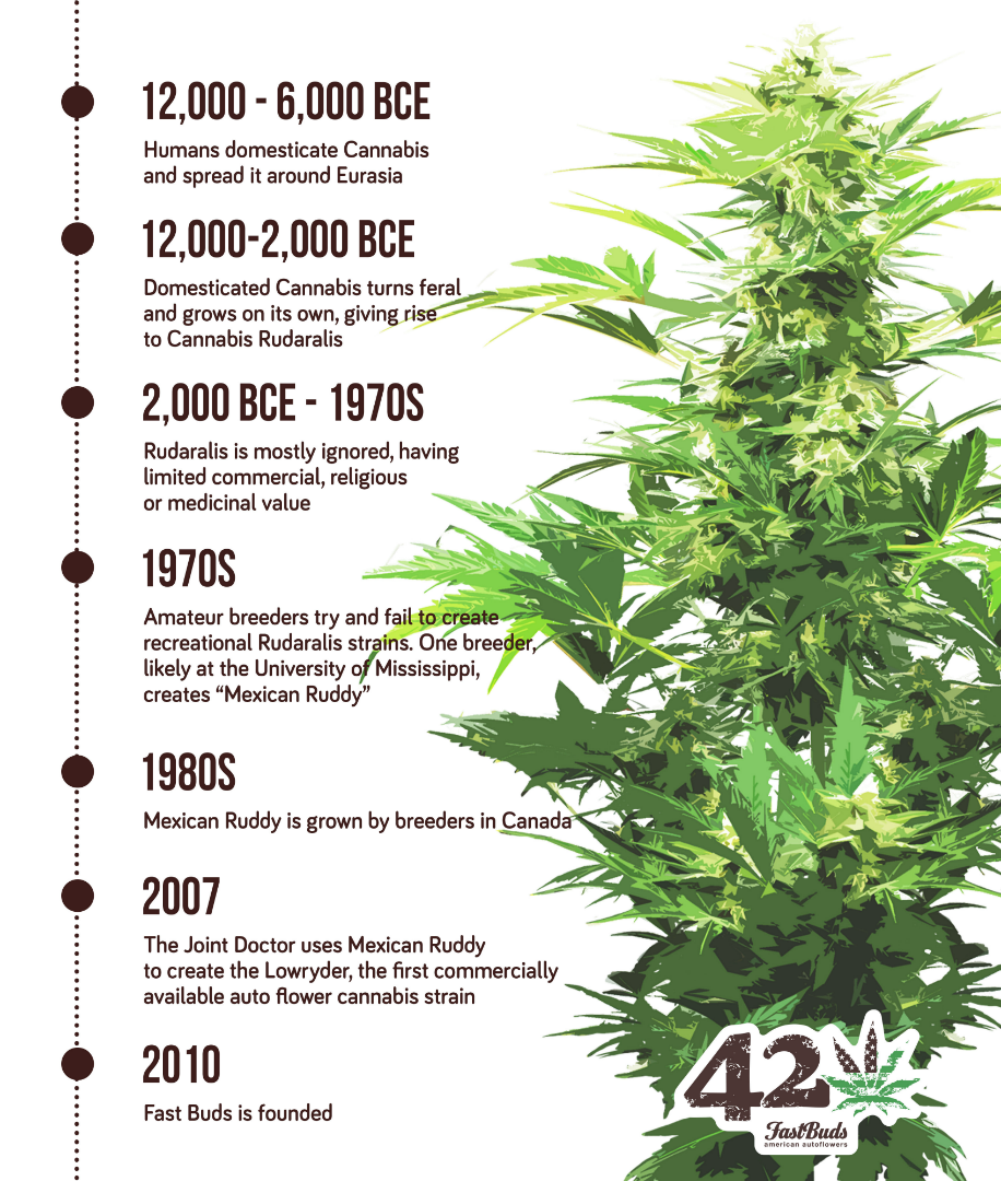 A timeline describing the history of autoflowering cannabis