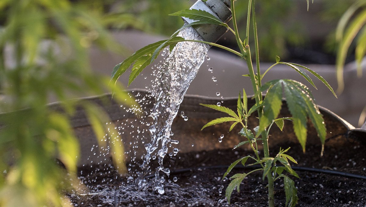 How often should I water my plants: overwatering
