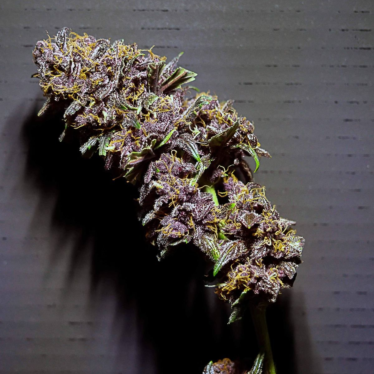 purplelemonade