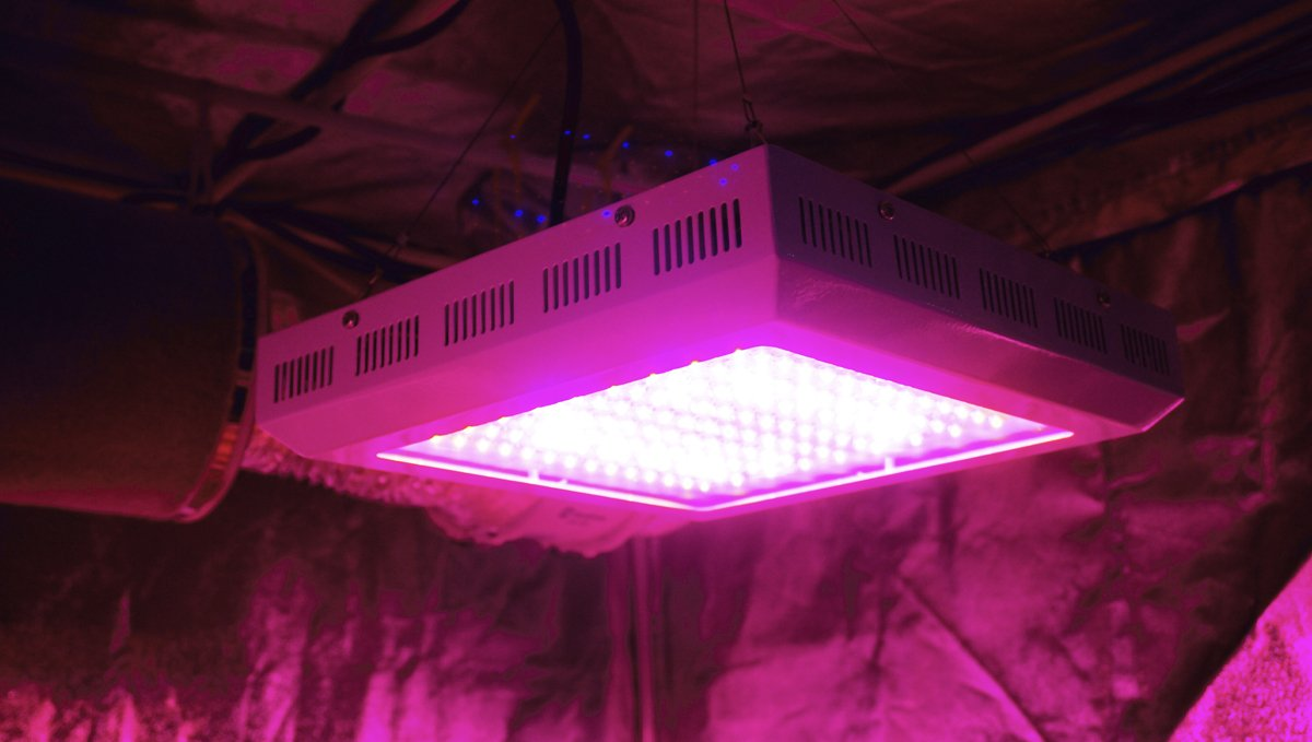 Grow Autoflowers with LEDs: how to grow autos with leds