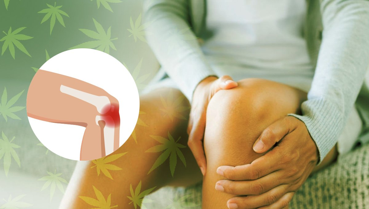 Pain relief and anti-inflammatory properties of Cannabis