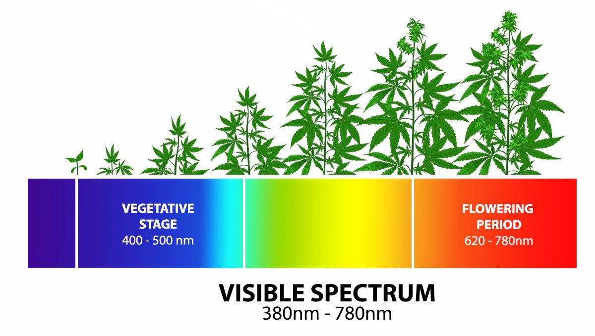 Grow Autoflowers with LEDs: light spectrums