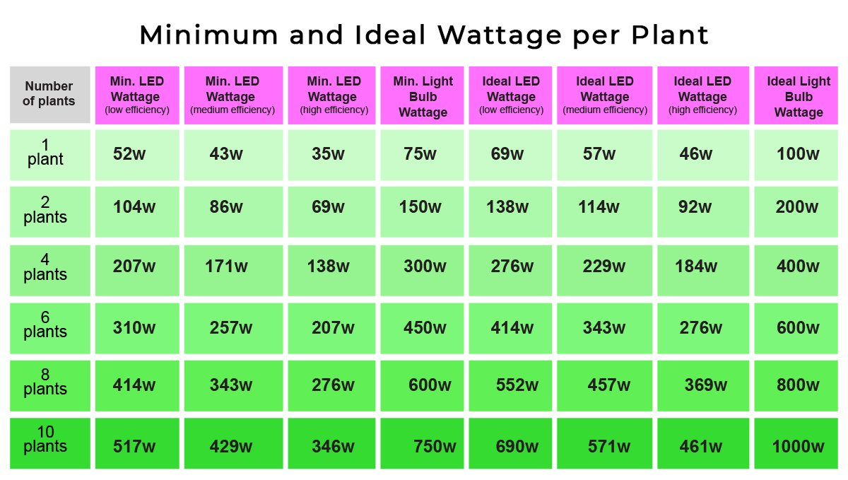 Grow Autoflowers with LEDs: led watts per plant
