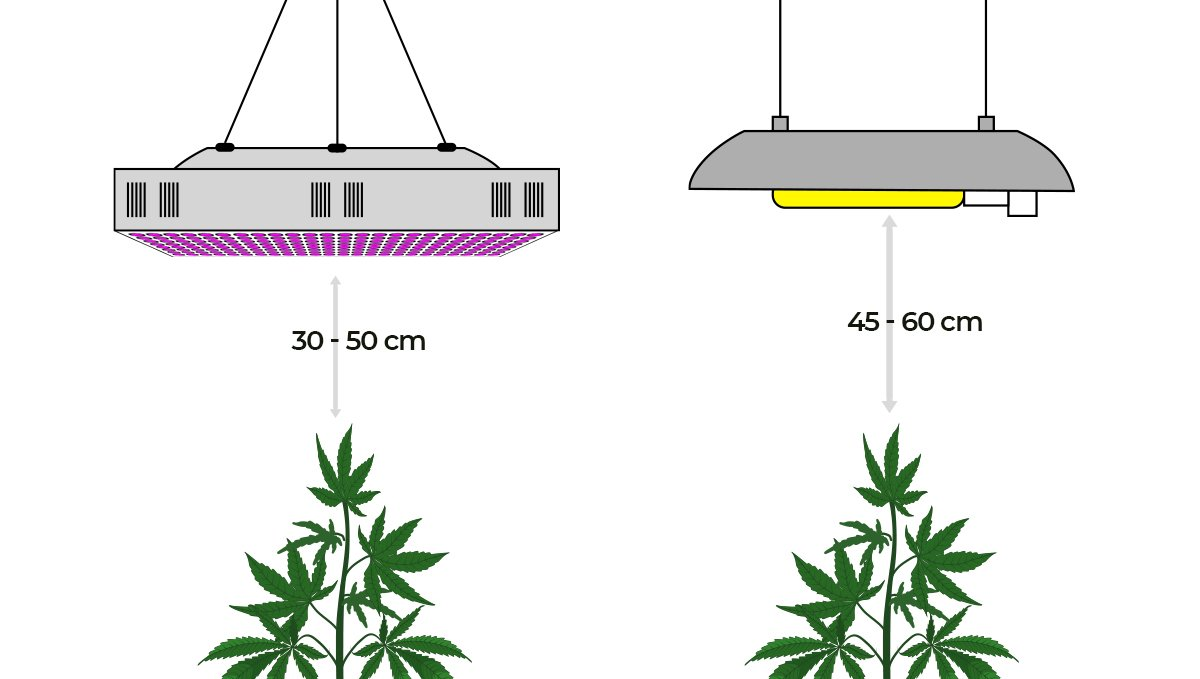 How the environment affects buds: light distance