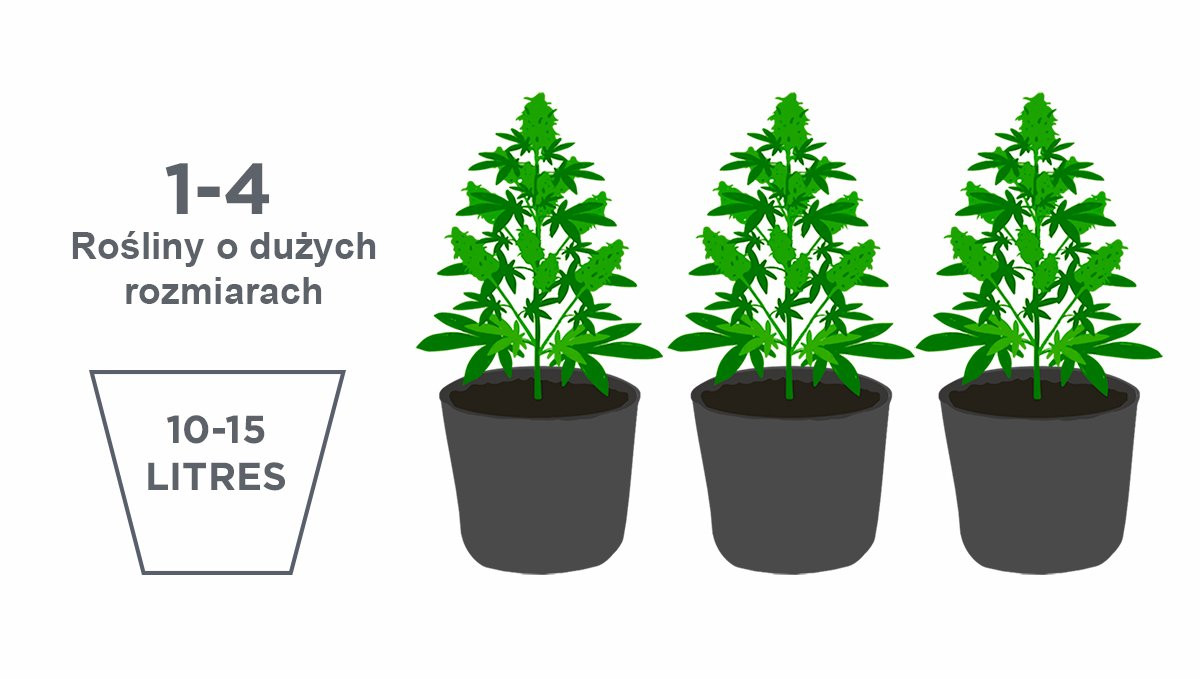 Best pot size for autoflowers: large-sized plants