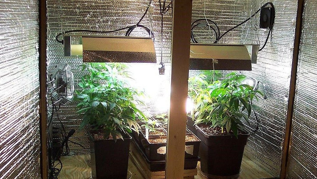Diy grow room: improvised grow room