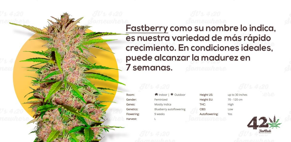 Fast Buds Fastberry