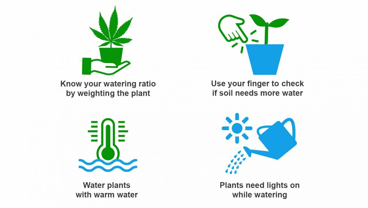 How often should I water my plants: top tips