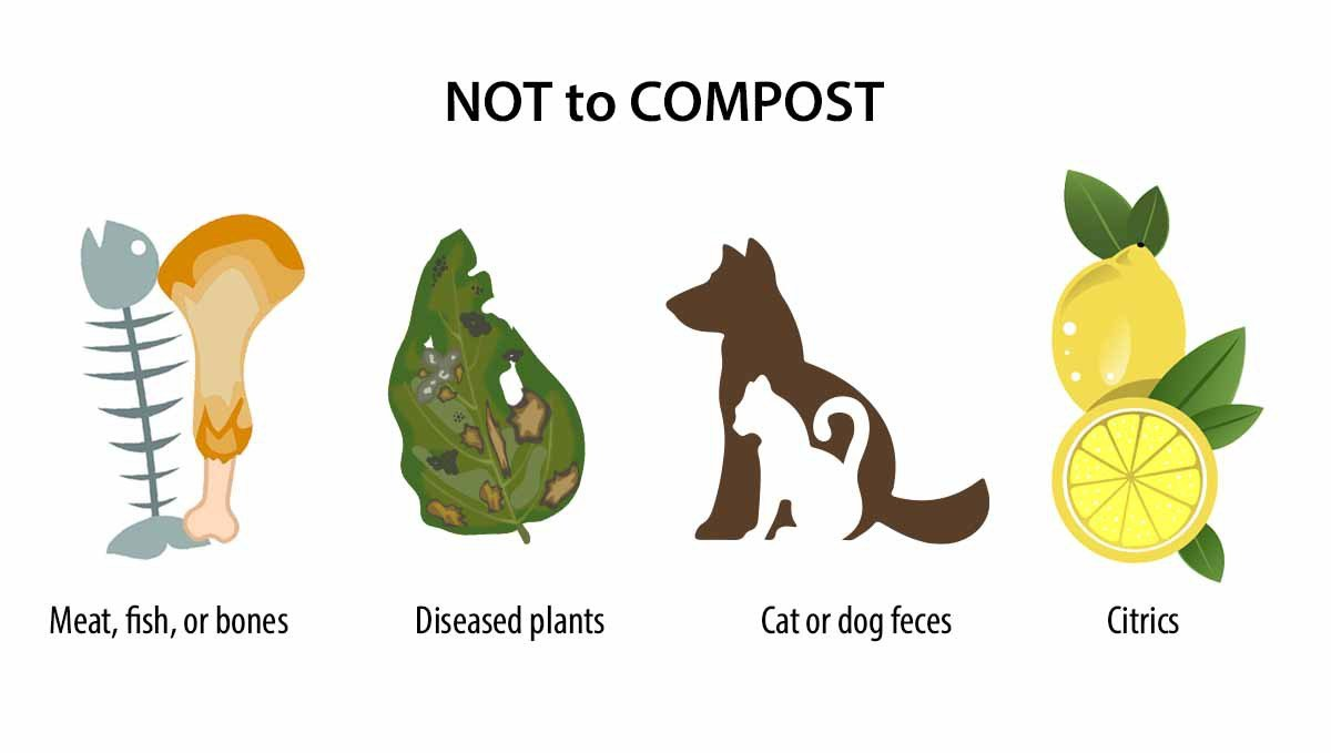 Composting: what not to compost