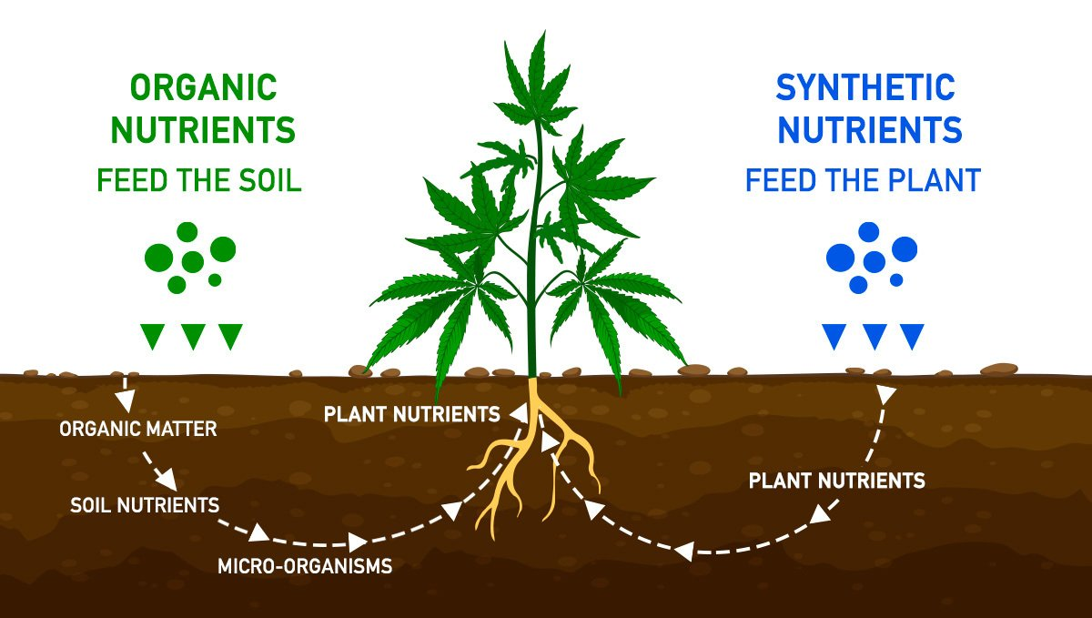 Growing Cannabis: Organic Vs Synthetic Nutrients | Fast Buds