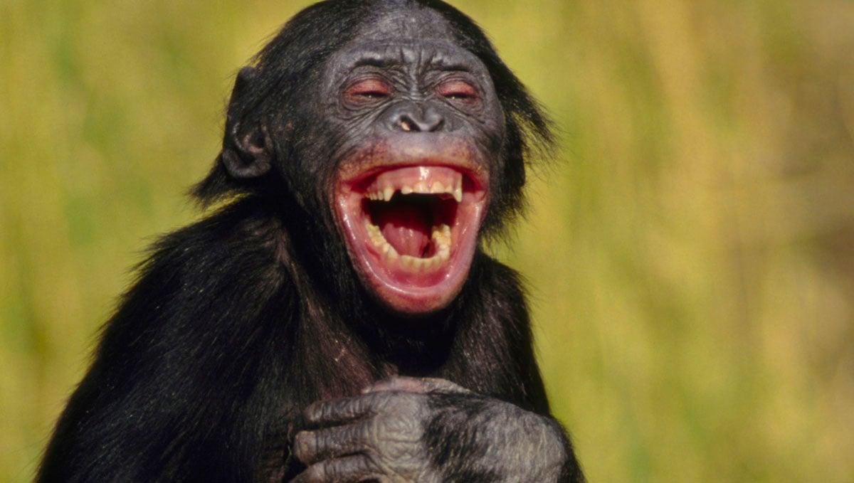 when you laugh i laugh