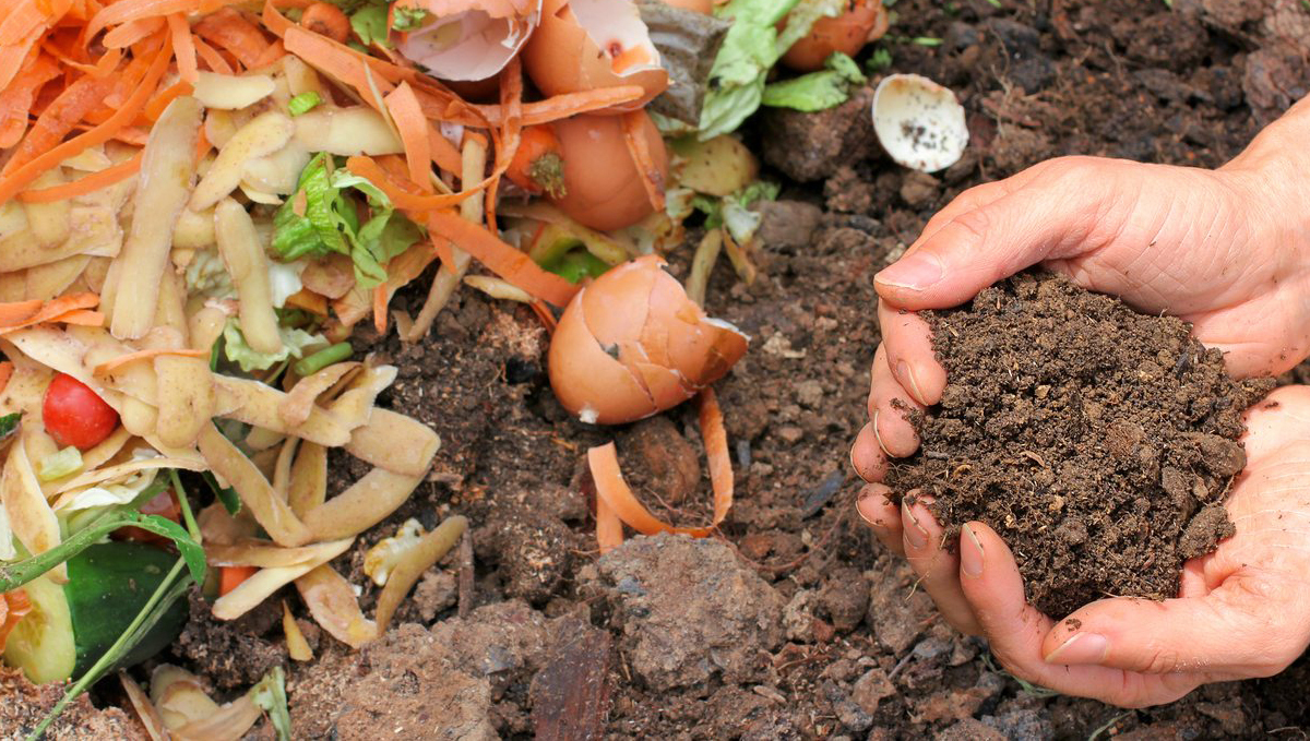 Composting: what to compost