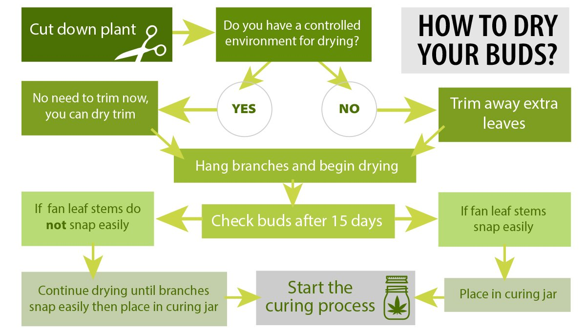 How to dry cannabis: what to consider