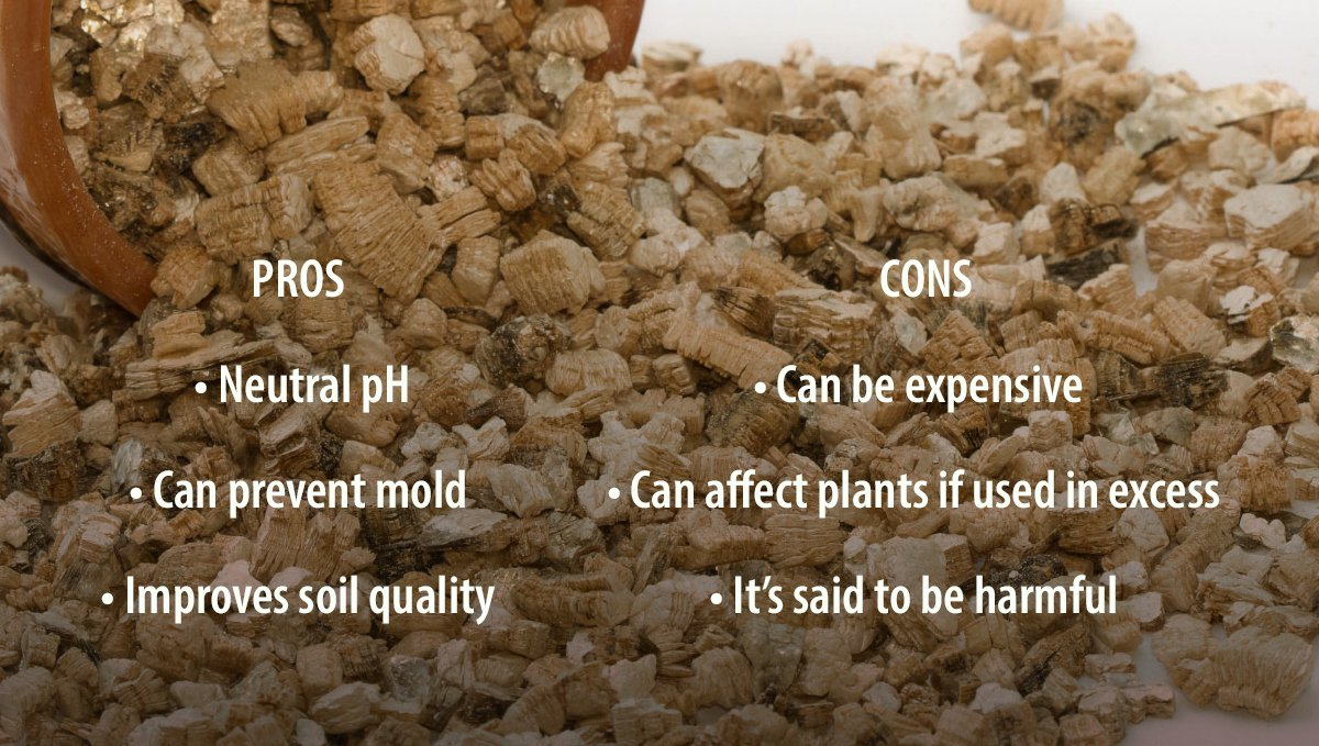 Pros and Cons of Adding Vermiculite to your Soil