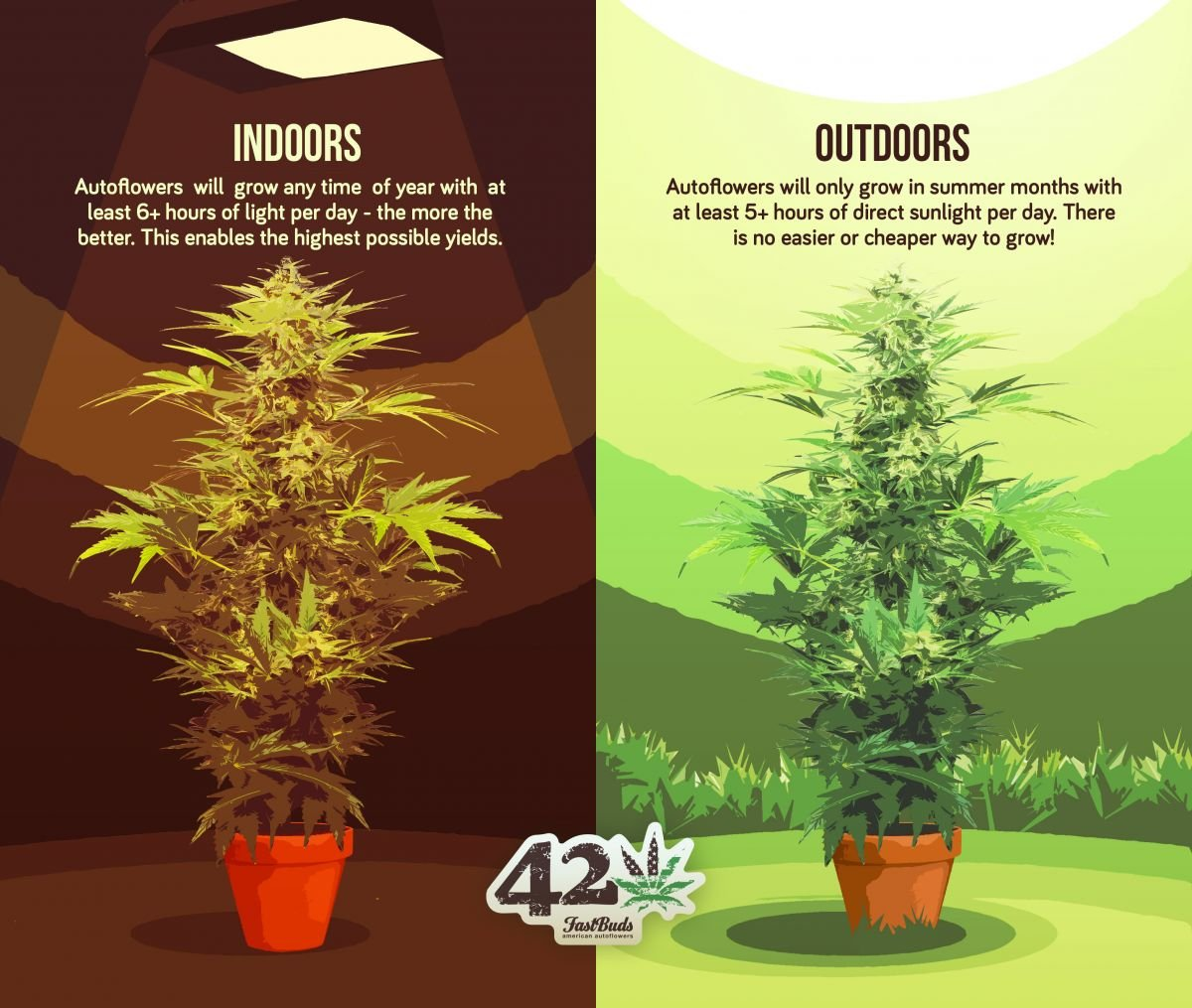 Difference between growing autoflowers indoors and outdoors described