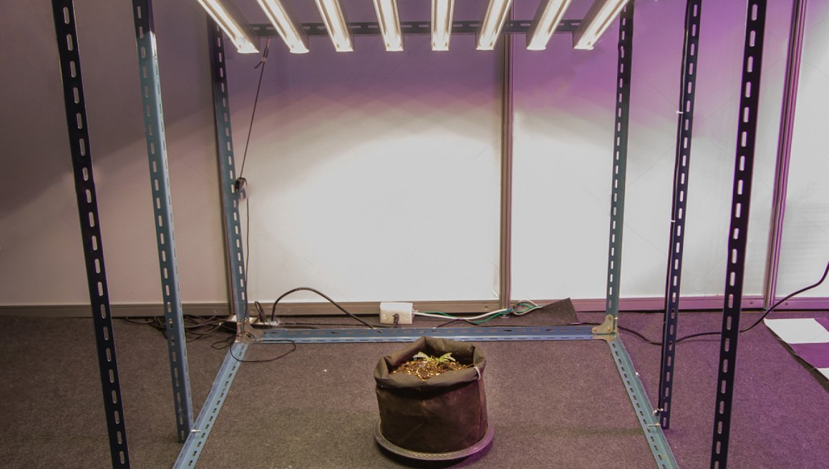 Diy grow room: structure of a grow tent