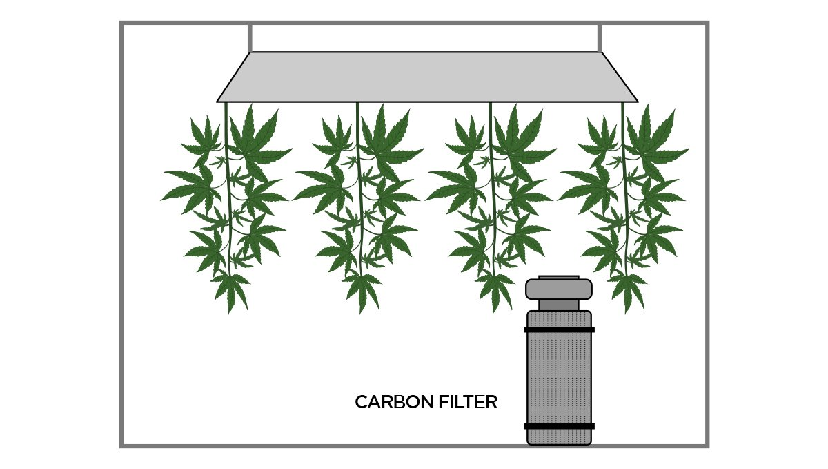 How to dry cannabis: carbon filter