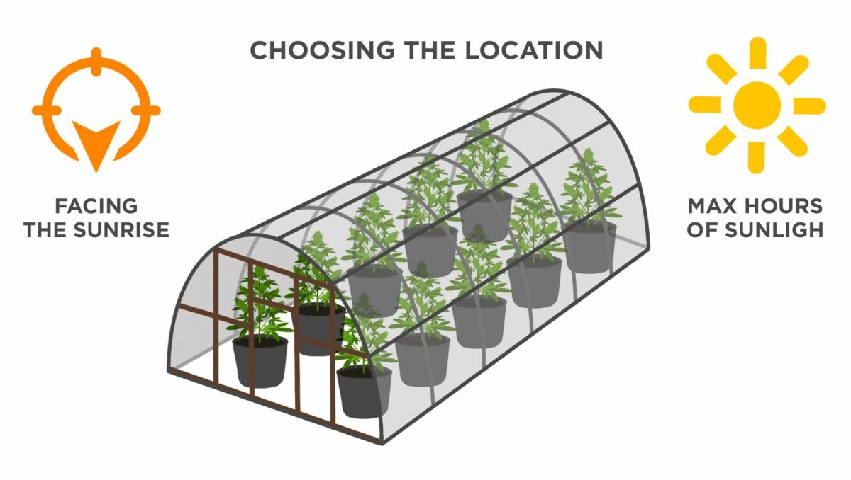 Growing Autoflowering Cannabis Outdoors: your location