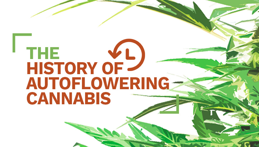 The History of Autoflowering Cannabis