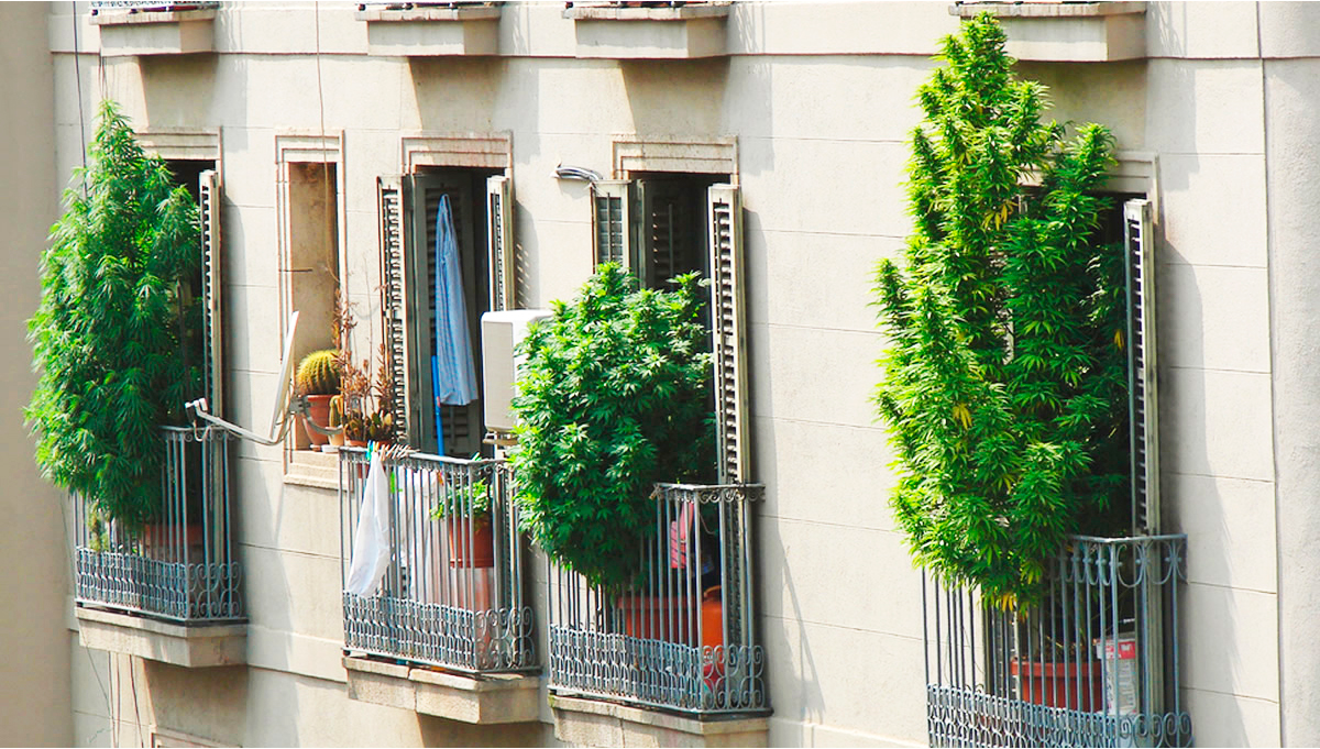 7 Tips on Growing Weed on a Balcony