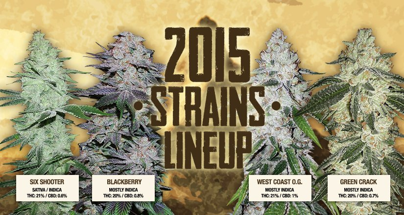 The long-awaited new strains