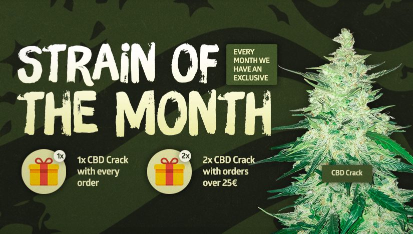 Fast Buds' Strain of the Month: CBD Crack!