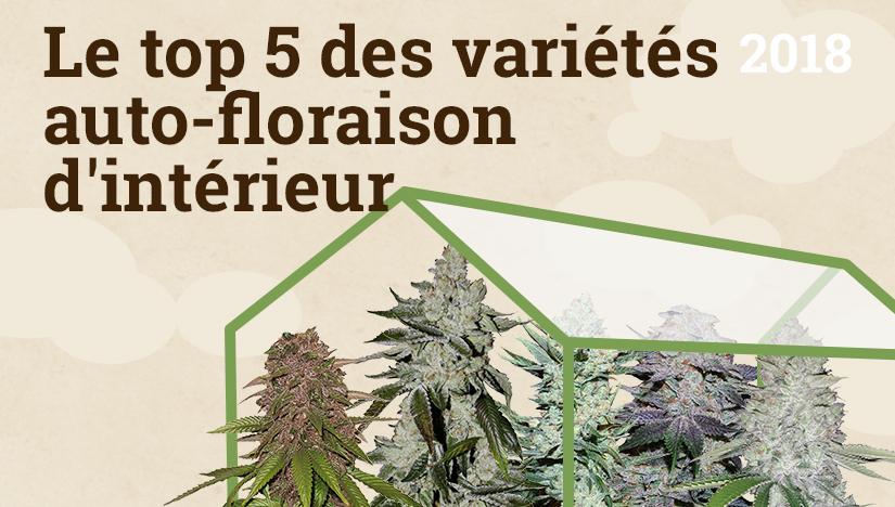 Le top 5 des variétés auto-floraison d\'intérieurFastBuds Graines de ...