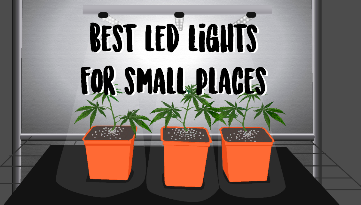 Best LED Lights for Growing in Small Spaces