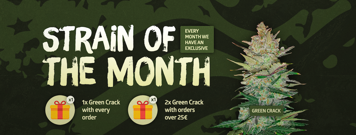 New Strain of the Month promo!