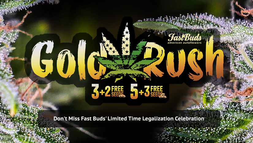 Fast Buds' California Gold Rush Celebration Offers Free Seeds: 3+2 and 5+3