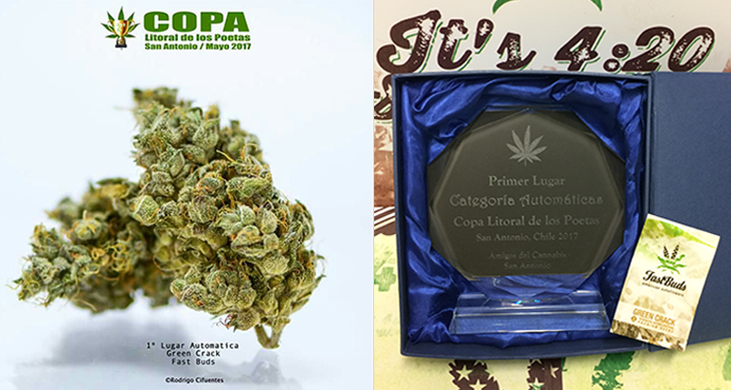 Green Crack awarded 1st Prize in Chile!
