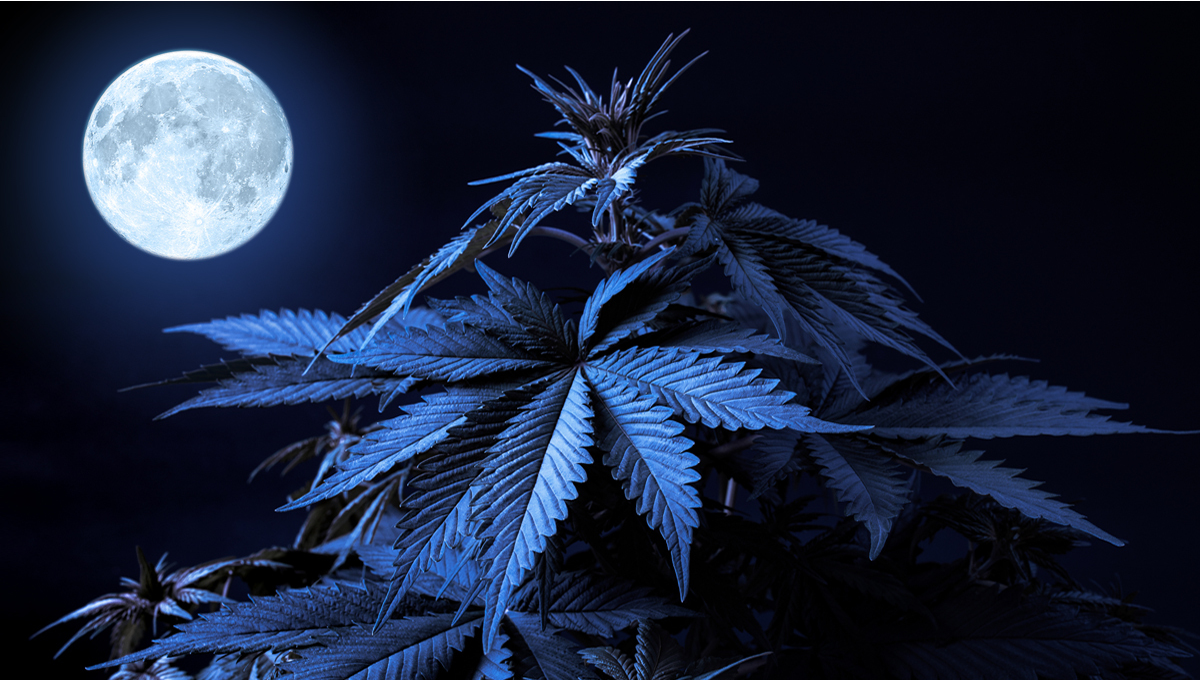Lunar Calendar - Cannabis and the Moon