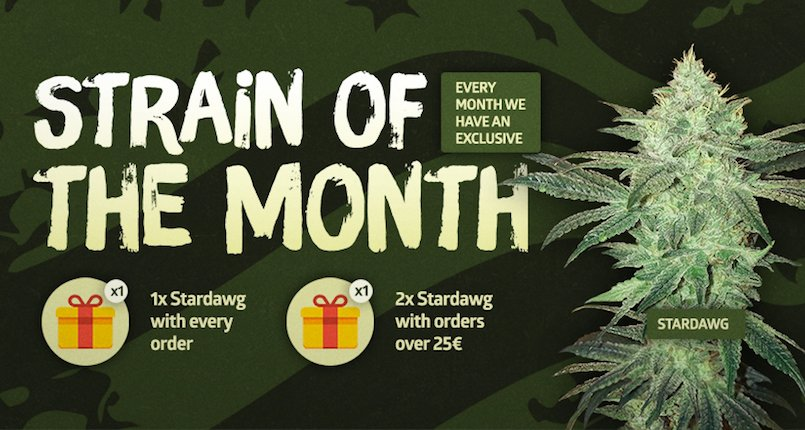 STARDAWG E`IL NUOVO STRAIN OF THE MONTH!