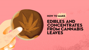 How to Make Edibles From Cannabis Leaves