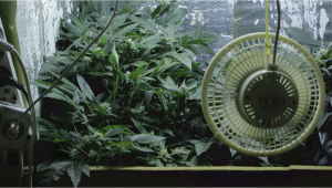 Ventilation For Grow Tent or Grow Room: Cheap And DIY Solutions