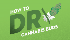How to Dry Cannabis Buds