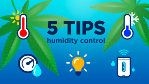 5 Top Tips On Controlling Humidity During The Growing Period