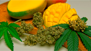 Understanding Terpenes: What is Myrcene?