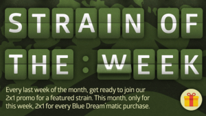 BLUE DREAM'MATIC IS OUR 2X1 STRAIN OF THE WEEK