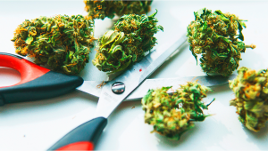7 Tips To Grind Weed Without A Grinder