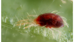 How to Get Rid of Spider Mites on Cannabis Plants