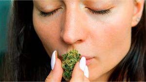 7 Ways of Getting Rid Of Weed Smell