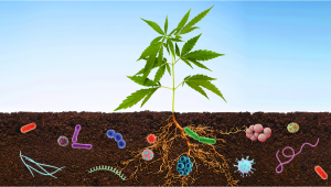 Benefits Of Microorganisms in Your Cannabis Garden