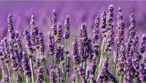 Understanding Terpenes: What is Linalool?