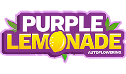 Purple Lemonade logotype